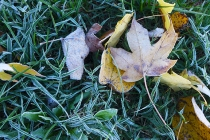 Nov 1, the first frost