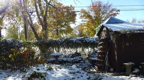 more snowy garden