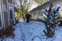 snowy bottle trees