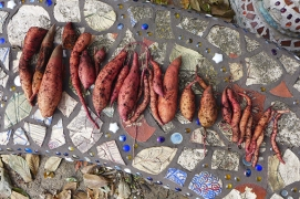 my sweet potato harvest