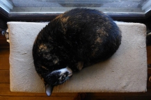 Lady Morgaine on her heated cat bed